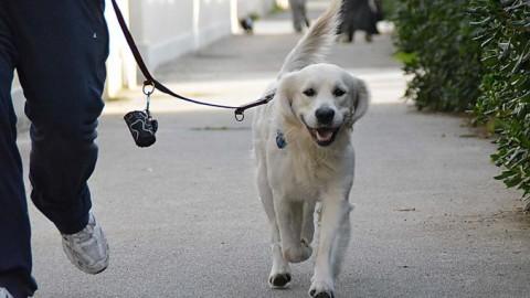 Guinzaglio per cani: quale scegliere in rete – Notizie.it