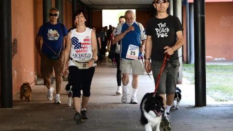 """Fusignano, ritorna la """"Bau Run"""", camminata a sei zampe per cani e … – Lugonotizie.it"""