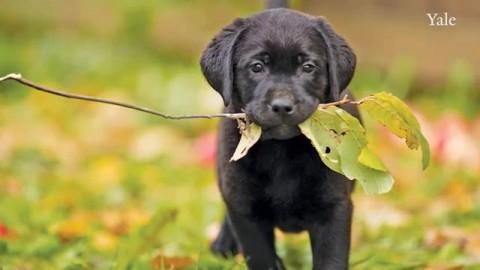 Il tuo cane sa parlati: basta saperlo ascoltare per riconoscere le sue emozioni – La Repubblica
