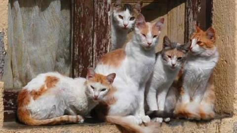 Sanremo invasa dai gatti randagi, 1 ogni 15 abitanti quasi un record … – Riviera24.it