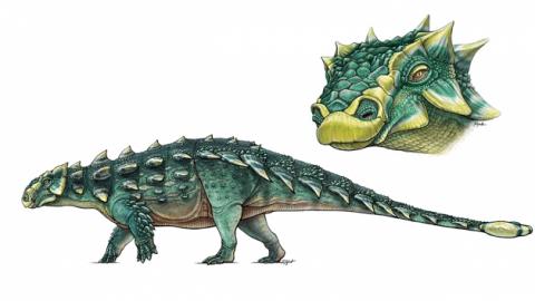 Scoperto Zuul, temibile anchilosauro 'distruttore di stinchi' – Scienzenotizie.it (Comunicati Stampa) (Blog)