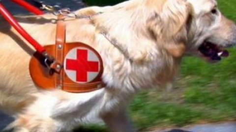 Rimini, aggredito un cane guida: la denuncia e l'appello dell'Unione … – SuperAbile