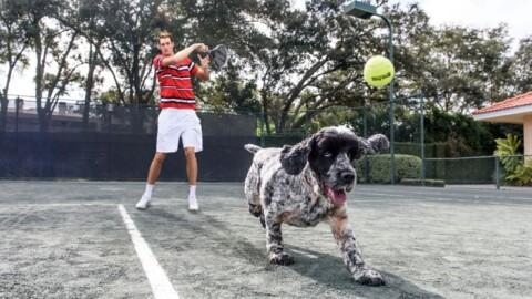 Francesca rimanda le polemiche, le hostess, il cane di Isner… – TennisItaliano.it