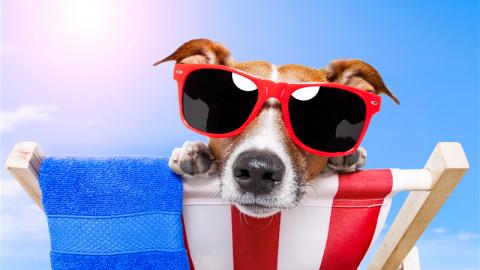 Cani in spiaggia: i consigli di Segugio.it per renderli felici – Segugio.it