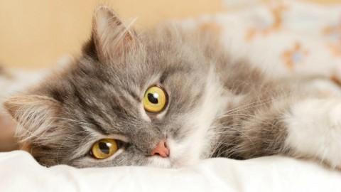 Allarme: solo la metà dei cani e gatti di casa sono vaccinati – Velvet Pets Italia