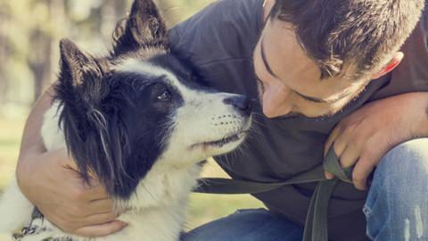 Cani e proprietari condividono la personalità – GreenStyle