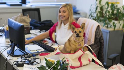 """Domani è la """"giornata mondiale del cane in ufficio"""": più produttività e … – Il Sole 24 Ore"""