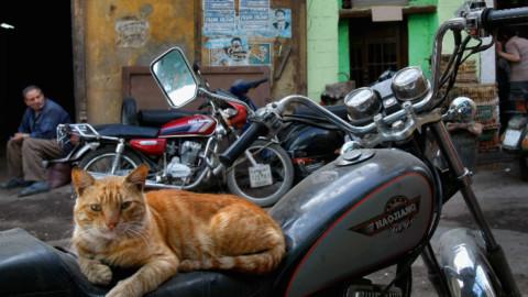 L'uomo e il gatto, il rapporto iniziò già prima degli Egizi – Sky Tg24