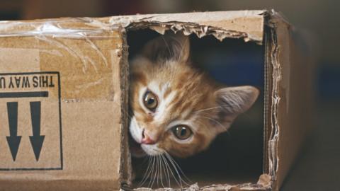 I gatti sono amici dell'uomo da circa 10mila anni, lo rivela una … – L'Huffington Post