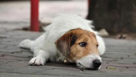 Il Municipio XI si schiera contro l'abbandono di cani e gatti – Urloweb