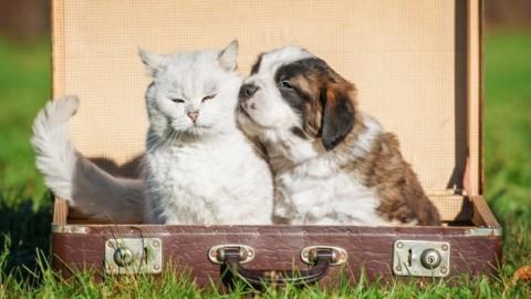 Cane, gatto e passaporto: come fare il documento indispensabile … – Velvet Pets