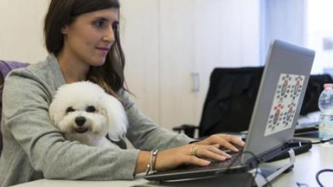"""Il cane (o il gatto) in ufficio? Fa bene. E' la """"Take your dog to Work … – Affaritaliani.it"""
