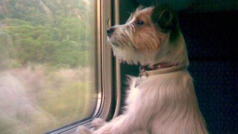 """""""Vergognoso che i cani paghino il biglietto del treno ei bambini no"""" – BergamoNews.it"""