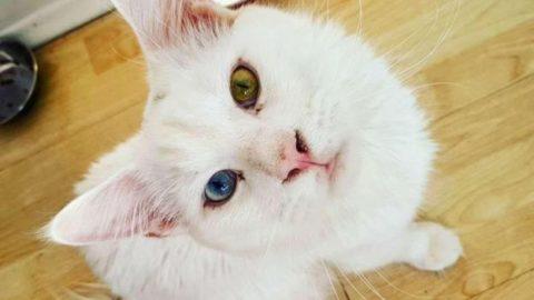Tihon: il gatto Maine Coon star del web – DeAbyDay.it (Blog)