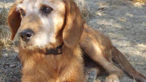 Animali domestici, più della metà dei fiorentini li porterebbe in … – gonews