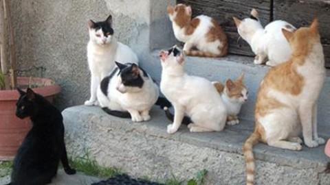 Udine: appello per la sterilizzazione delle colonie feline – Il Friuli
