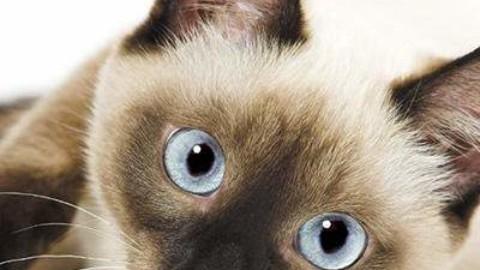 Uomo e gatto: un'amicizia millenaria – giornaleditalia – ilgiornaleditalia