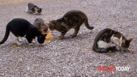 Una casa per i gatti randagi grazie all'accordo rinnovato tra Comune … – MilanoToday