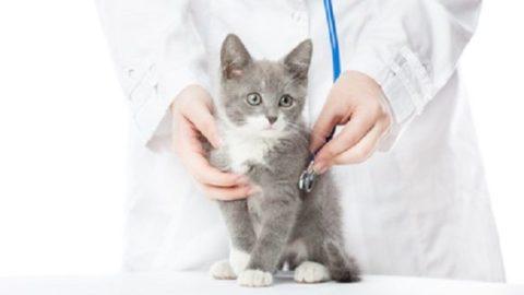 Castrazione e sterilizzazione gatto, pro e contro – Mondo Gatti