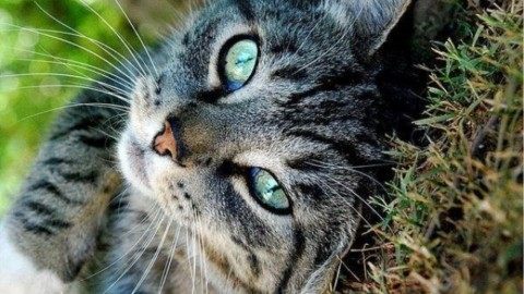 Animali, ricerca: i gatti si sono addomesticati da soli – Palermomania.it
