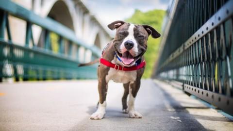 Cane, il migliore amico del fotografo. Ecco i vincitori del Dog … – Rai News