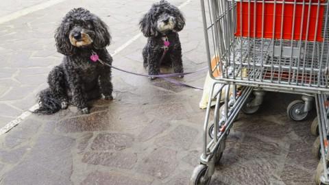 Cani al supermercato: secondo la Lav la nota del Ministero della … – ilfattoalimentare.it