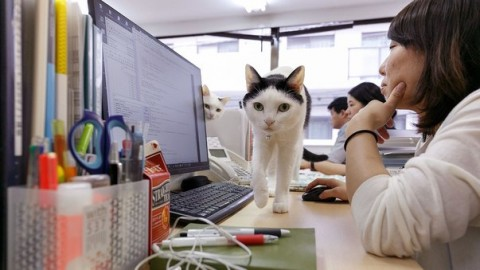 Gatti da ufficio per lavorare di più e meglio – Il Gazzettino