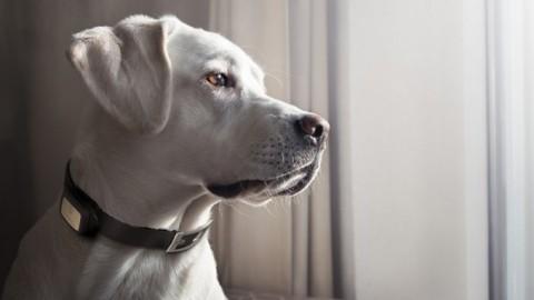 Europ Assistance, polizza per animali domestici – Insurance Trade