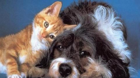 Animali domestici, il 67% dei savonesi li porterebbe in vacanza con sé – Il Vostro Giornale