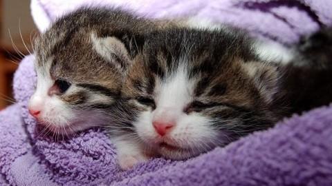 Dieta vegana per il gatto, bocciate le nuove tendenze per gli amici a … – Mondo Gatti