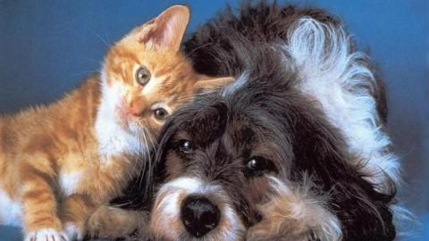 Cani e gatti come membri effettivi della famiglia: gli italiani li … – Palermomania.it