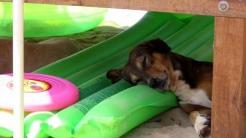 """Niente spiaggia per cani a Lido di Dante: """"I turisti disdicono le … – RavennaToday"""