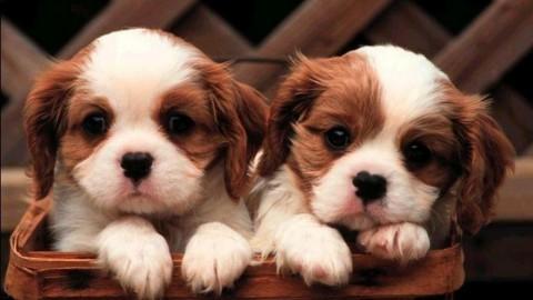 Animali domestici: più di un terzo dei trevigiani li porterebbe in … – TrevisoToday