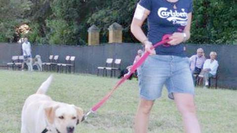 Seconda sfilata di cani al Quartiere del Poggio con raccolta fondi – ForlìToday