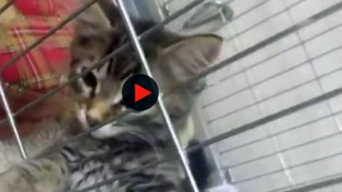 I cuccioli del gattile di Bologna: 'Cercano casa, gli animali non si … – BolognaToday