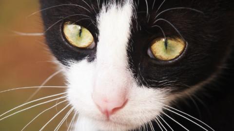 Gatto tira lo sciacquone, arriva bolletta record – GreenStyle