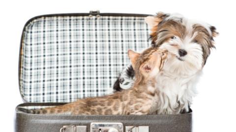 Assicurazioni per cani in vacanza – Petpassion.tv