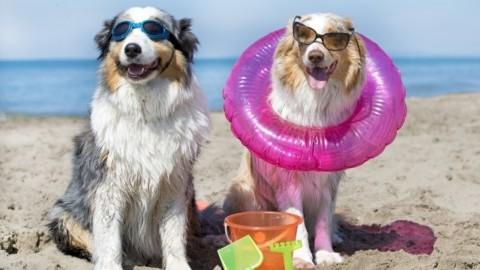 Quattro italiani su dieci vanno in vacanza con gli amici… animali … – Il Sole 24 Ore