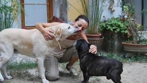 In viaggio con i nostri animali domestici: il parere di Marina Menichelli – ValdarnoPost