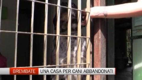Cane salvato dall'incendio L'impresa dei vigili del fuoco – L'Eco di Bergamo (Registrazione)