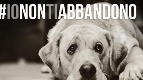 #ionontiabbandono: la campagna della Lega del cane – Il Secolo XIX