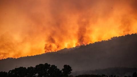"""Il 5 stelle Bernini: """"Gatti usati per appiccare l'incendio sotto il … – L'Huffington Post"""