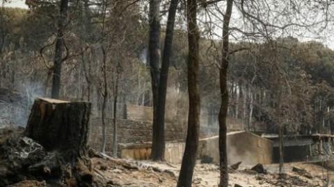 """Incendi, gatti vivi usati per appiccare i roghi sul Vesuvio? """"Il garante … – Il Fatto Quotidiano"""