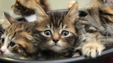 USA: 16 anni di reclusione per l'uomo che uccise 21 gatti in California – Blasting News
