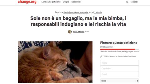 """""""Rivoglio la mia Sole"""": la compagnia aerea ha smarrito il gatto e non … – Velvet Pets"""