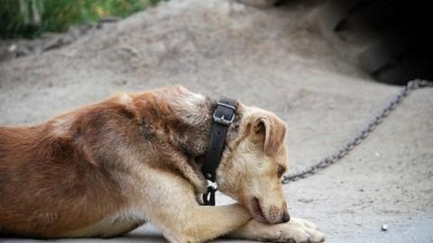 """""""SOS CANE SUL BALCONE"""": il nuovo servizio per salvare gli animali – Velvet Pets"""