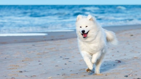 Cani in spiaggia: doveri, diritti e trucchi per non farsi cacciare – Velvet Pets