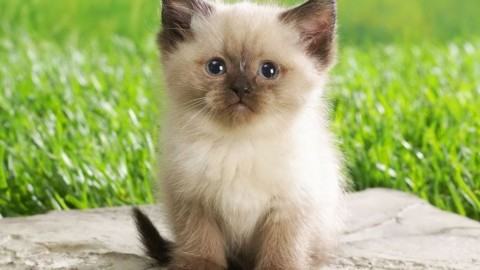 Nomi per gatti: idee originali – Velvet Pets