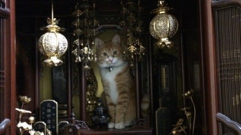 Il gatto buddhista – Velvet Pets