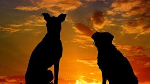 Come assicurare cani e gatti e partire sereni per le vacanze – AGI – Agenzia Giornalistica Italia